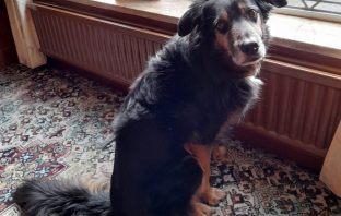 Jazz the rescue dog