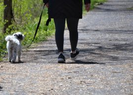 Six expert tips to get maximum health benefits from your daily walk