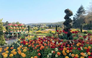 The Spring Bulb Festival at Trentham Gardens