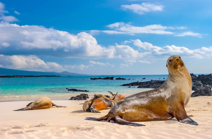 Animals of the Galapagos Islands.
