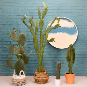 Faux cactus plants, £49 small and £109 large, baskets from £19, from Puji, www.puji.com